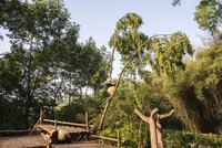 木に登る1頭のパンダ 10241002501| 写真素材・ストックフォト・画像・イラスト素材|アマナイメージズ