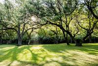 ハワイ州オアフ島の公園