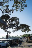 ハワイ島の街並み 10241002626| 写真素材・ストックフォト・画像・イラスト素材|アマナイメージズ