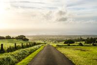 ハワイ島の牧場にある一本道 10241002775  写真素材・ストックフォト・画像・イラスト素材 アマナイメージズ