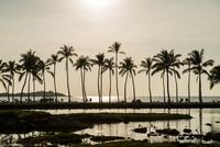 夕暮れの海と椰子の木 10241002781  写真素材・ストックフォト・画像・イラスト素材 アマナイメージズ