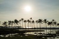 夕暮れの海と椰子の木 10241002782  写真素材・ストックフォト・画像・イラスト素材 アマナイメージズ
