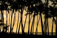 夕暮れの海と椰子の木 10241002783  写真素材・ストックフォト・画像・イラスト素材 アマナイメージズ
