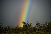 ハワイ島の虹 10241002884  写真素材・ストックフォト・画像・イラスト素材 アマナイメージズ