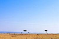 マサイマラのサバンナと青空 10243000293| 写真素材・ストックフォト・画像・イラスト素材|アマナイメージズ