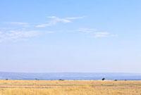 マサイマラのサバンナと青空 10243000294| 写真素材・ストックフォト・画像・イラスト素材|アマナイメージズ
