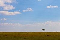 マサイマラのサバンナと1本の大木と青空 10243000335| 写真素材・ストックフォト・画像・イラスト素材|アマナイメージズ
