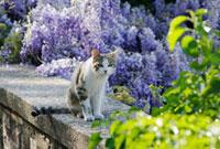 塀の上の猫 10244000537| 写真素材・ストックフォト・画像・イラスト素材|アマナイメージズ