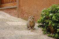 道に座っている猫