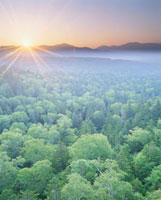 朝日と下勝北岳と新緑の樹林
