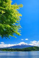 富士山と河口湖とモミジの新緑