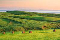 牧草ロールと朝の海