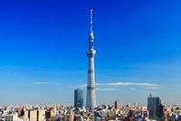 東京スカイツリー 10247001812| 写真素材・ストックフォト・画像・イラスト素材|アマナイメージズ