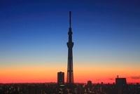 黎明の東京スカイツリー 10247001913| 写真素材・ストックフォト・画像・イラスト素材|アマナイメージズ