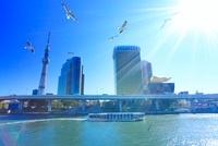 ユリカモメと東京スカイツリーと観光船と太陽の光芒