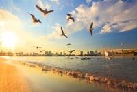 ユリカモメとレインボーブリッジと夕日と波
