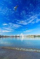 ユリカモメとレインボーブリッジと海