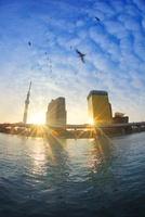 東京スカイツリーとビルに反射する朝日とカモメの群れ 10247003313| 写真素材・ストックフォト・画像・イラスト素材|アマナイメージズ