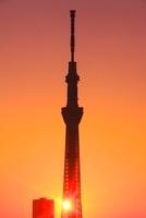 東京スカイツリーと朝日 10247003324| 写真素材・ストックフォト・画像・イラスト素材|アマナイメージズ