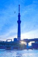 東京スカイツリーと朝日とカモメの群れと東武鉄道の電車 10247003326| 写真素材・ストックフォト・画像・イラスト素材|アマナイメージズ