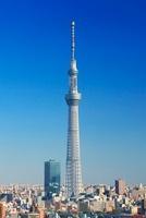 東京スカイツリー 10247003529| 写真素材・ストックフォト・画像・イラスト素材|アマナイメージズ