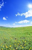 タンポポ咲く牧草地と太陽