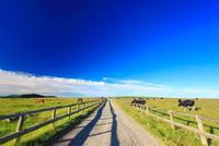 牧場の道とホルスタインと黒毛和牛と馬
