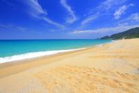 ウミガメの足跡と海 10247008842| 写真素材・ストックフォト・画像・イラスト素材|アマナイメージズ