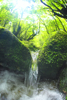 新緑の白谷川の枝沢の清流