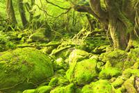苔むすもののけ姫の森
