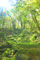 苔むす新緑の原生林