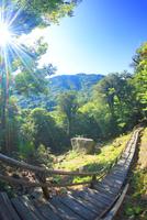 新緑の原生林と木もれ日と登山道