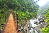 霧と荒川と吊橋,荒川橋 10247008987| 写真素材・ストックフォト・画像・イラスト素材|アマナイメージズ