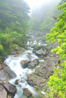 霧と新緑の荒川