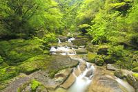 霧と新緑の荒川支流 10247009001| 写真素材・ストックフォト・画像・イラスト素材|アマナイメージズ