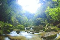 新緑の荒川支流 10247009003| 写真素材・ストックフォト・画像・イラスト素材|アマナイメージズ