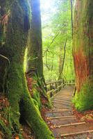 屋久杉の原生林と登山道