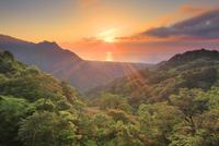 新緑の原生林と明星岳と朝日と安房方向の海