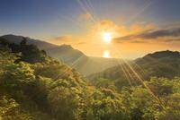 新緑の原生林と船行前岳と明星岳と朝日と安房方向の海