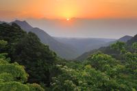 ヤマギリの花咲く新緑の原生林と明星岳と朝日