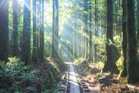 トロッコ道と屋久杉の林と朝霧の光芒 10247009101| 写真素材・ストックフォト・画像・イラスト素材|アマナイメージズ