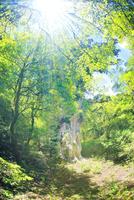 縄文杉と新緑と木もれ日
