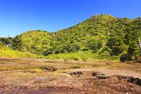 花之江河の湿原と黒味岳とヤクシカ 10247009186| 写真素材・ストックフォト・画像・イラスト素材|アマナイメージズ