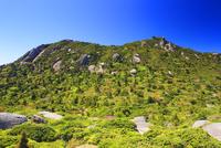 ミツバツツジ咲く新緑の黒味岳 10247009193| 写真素材・ストックフォト・画像・イラスト素材|アマナイメージズ
