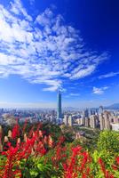 台北101などのビル群とベニツツバナと秋空