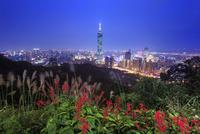 台北101などのビル群とベニツツバナの夜景