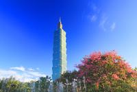 トックリキワタの花と台北101と噴水