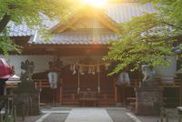 真田神社と夕日の木もれ日