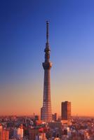 朝日に染まる東京スカイツリー 10247018569| 写真素材・ストックフォト・画像・イラスト素材|アマナイメージズ