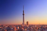 朝日に染まる東京スカイツリー 10247018572| 写真素材・ストックフォト・画像・イラスト素材|アマナイメージズ